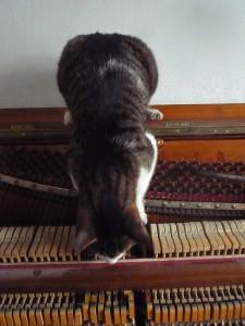 Kotki-na-pianinie (1)