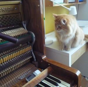 Kotki-na-pianinie (10)