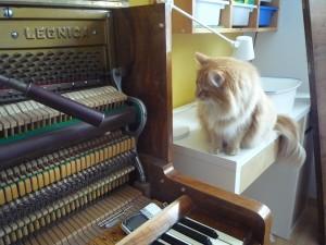 Kotki-na-pianinie (11)