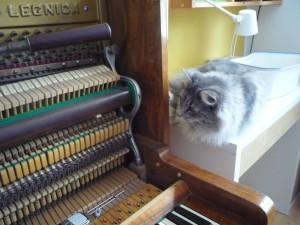 Kotki-na-pianinie (14)