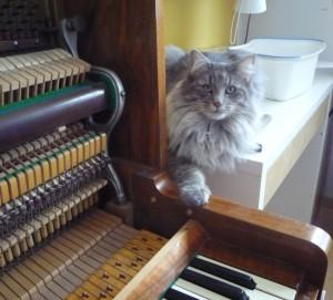 Kotki-na-pianinie (16)