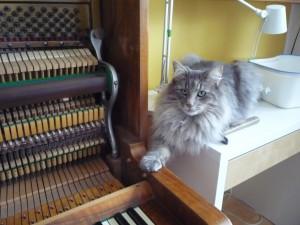 Kotki-na-pianinie (17)