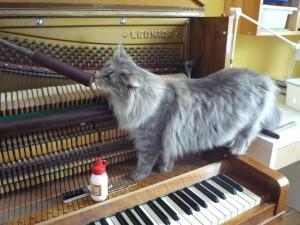Kotki-na-pianinie (18)