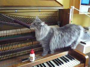 Kotki-na-pianinie (19)