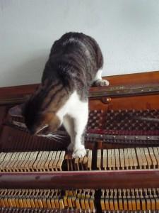 Kotki-na-pianinie (2)