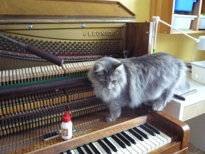 Kotki-na-pianinie (20)
