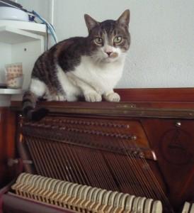 Kotki-na-pianinie (3)