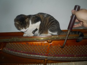 Kotki-na-pianinie (4)