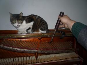Kotki-na-pianinie (5)