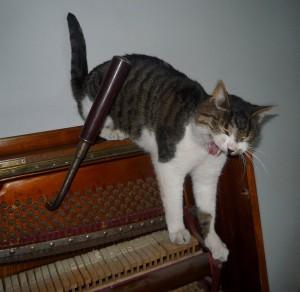 Kotki-na-pianinie (9)